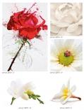 art-print-potolki-322339