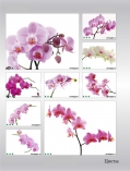 art-print-potolki-128022